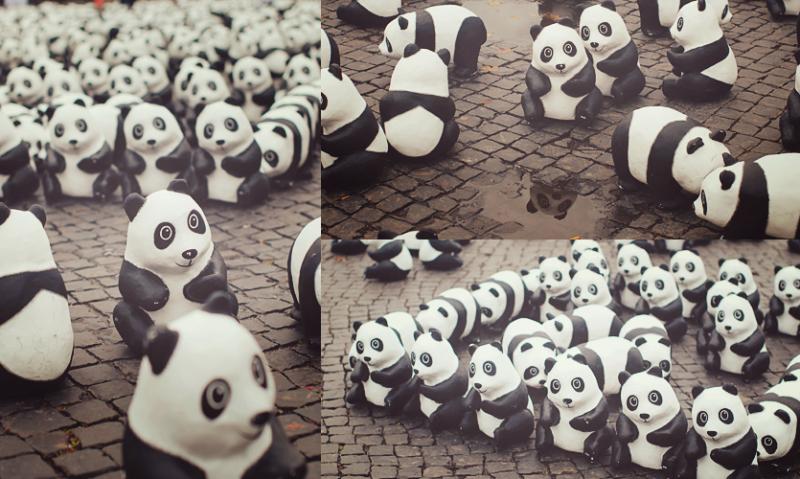 [Foto] 1600 Pandas